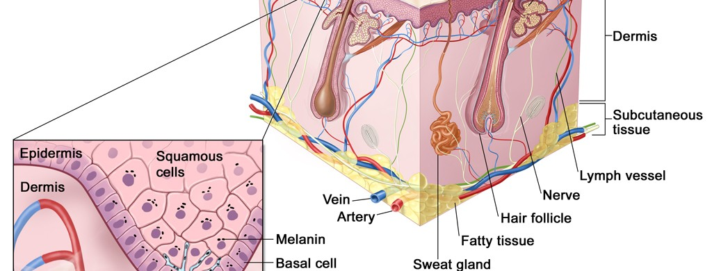 Ayurvedic Hidradenitis Suppurativa Treatment